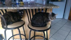 Nabby n Kitty under the counter 10-2014